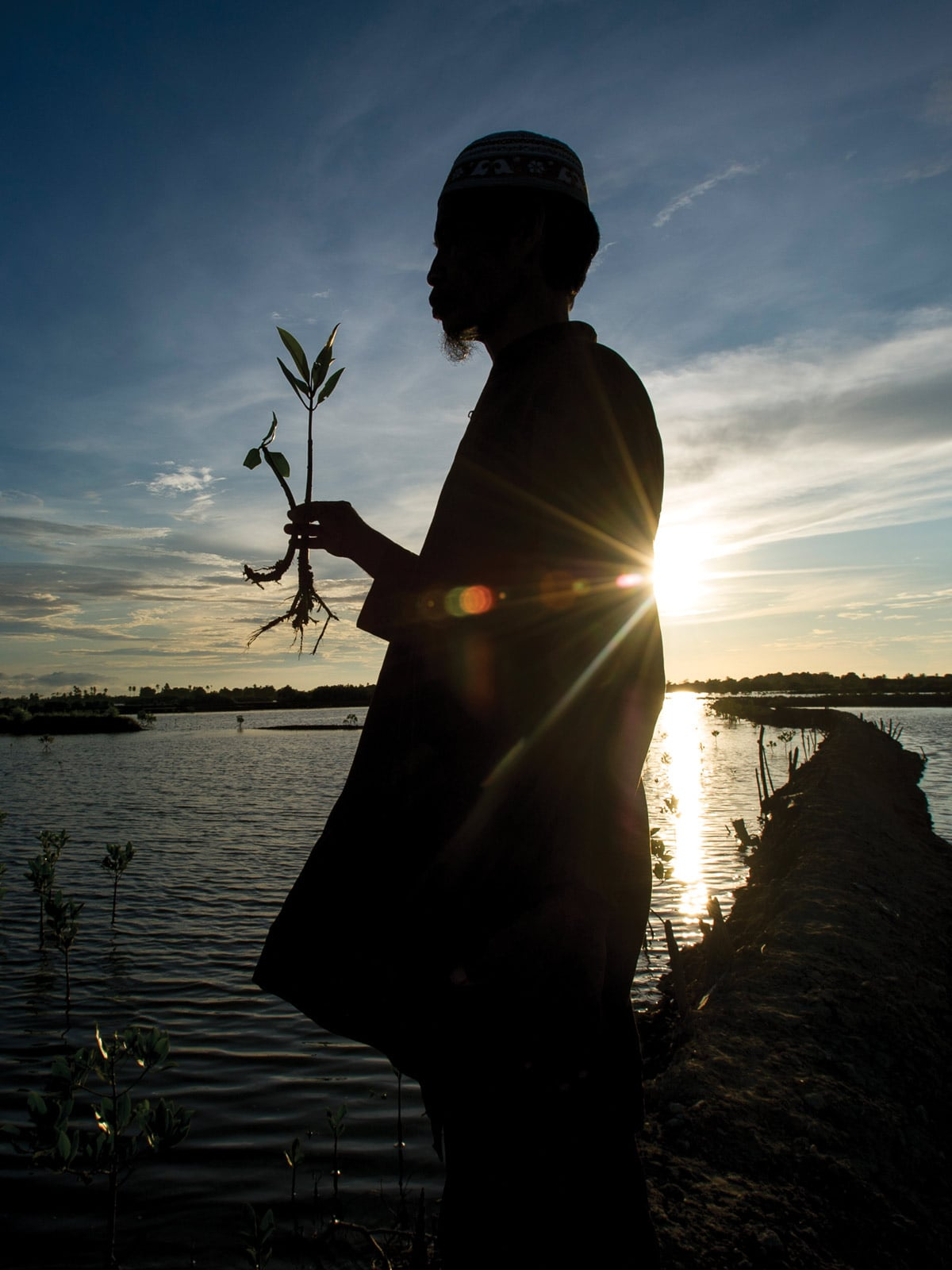 Man holding a plant to restore the mangrove